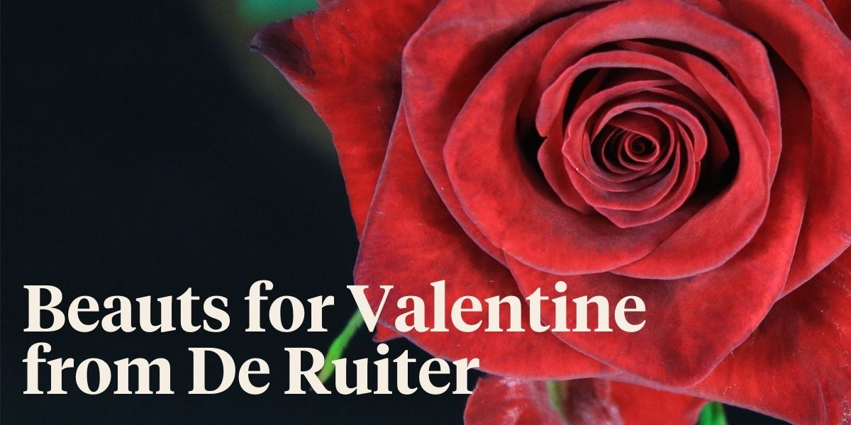 What is De Ruiter's Choice for Valentine 2021?